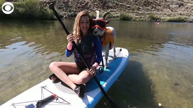 Watch: A Goat Takes Up Paddleboarding