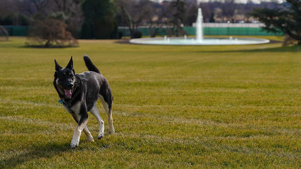 First Dogs Champ, Major Arrive At The White House