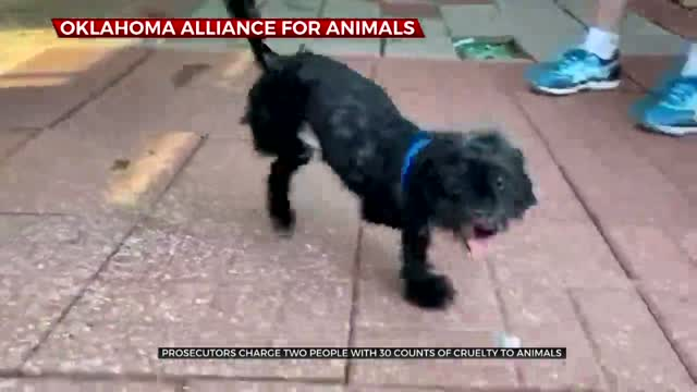 Prosecutors Charge 2 People With 30 Counts Of Cruelty To Animals