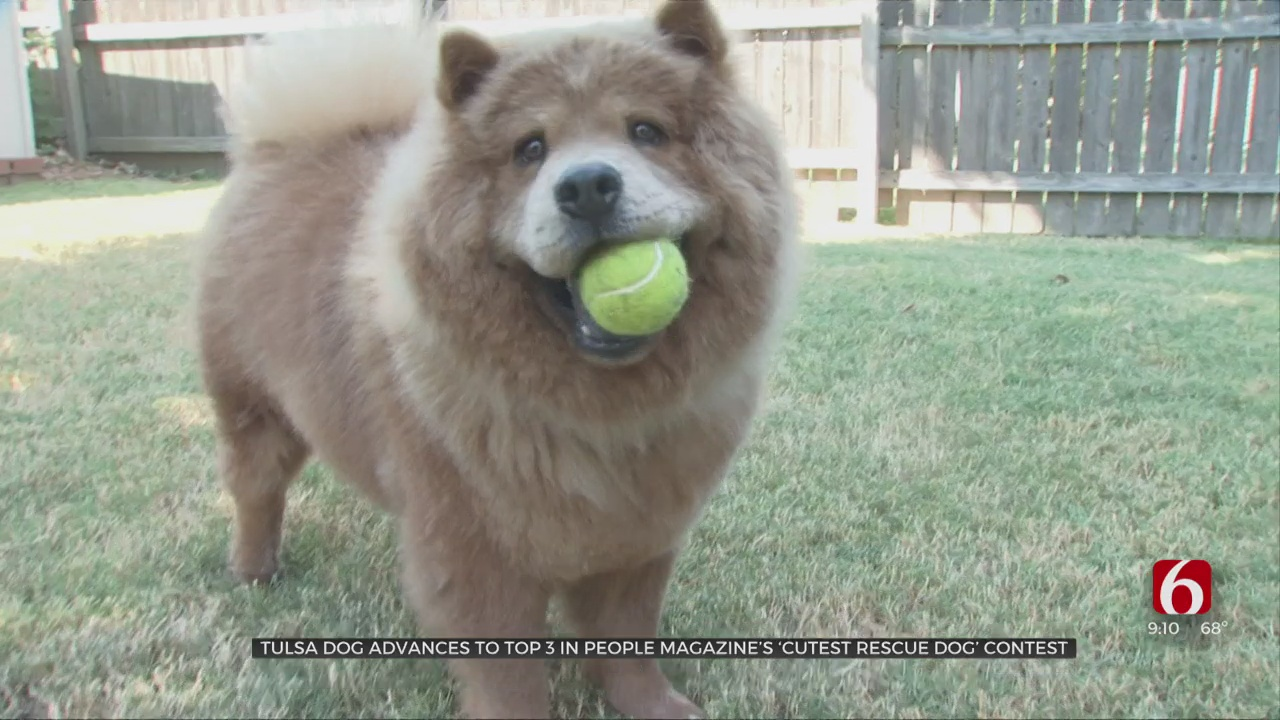Tulsa Dog Advances To Top 3 In People Magazine's 'World's Cutest Rescue Dog' Contest