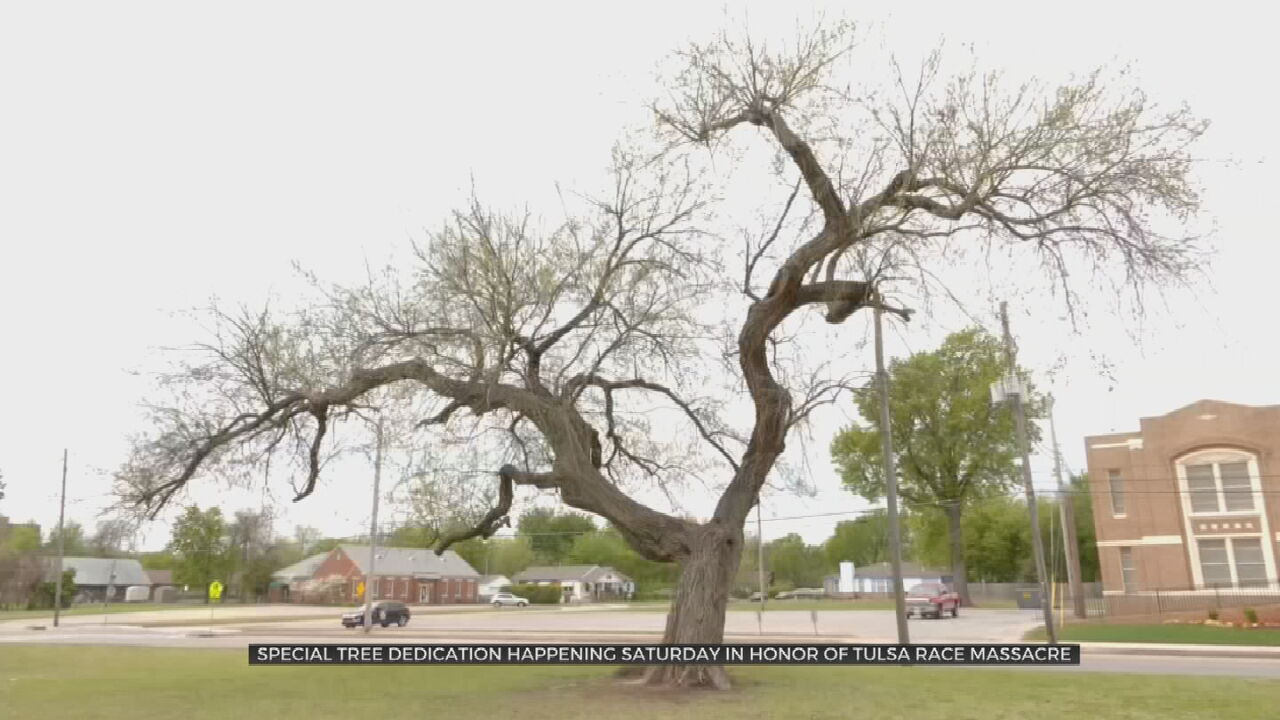 Local Groups To Dedicate Historic Tree In Memory Of Tulsa Race Massacre Centennial