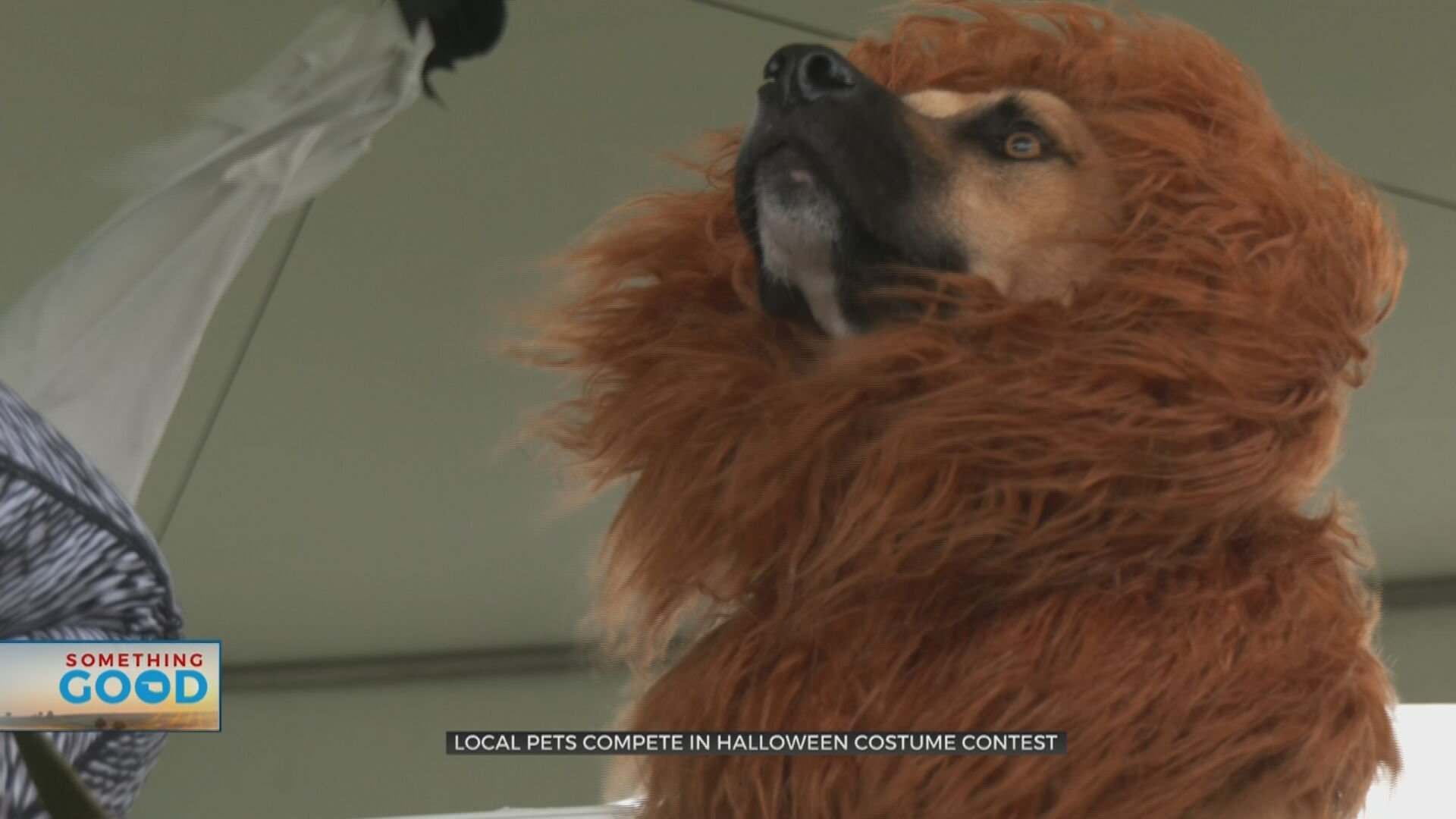 Dogs Show Off Creative Halloween Costumes For Treats, Not Tricks