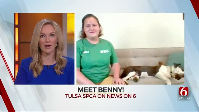 WATCH: Meet Benny, SPCA's Pet Who's Looking For His Forever Home