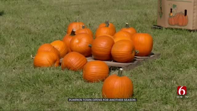Pumpkin Town Farms Opens For The Fall Season