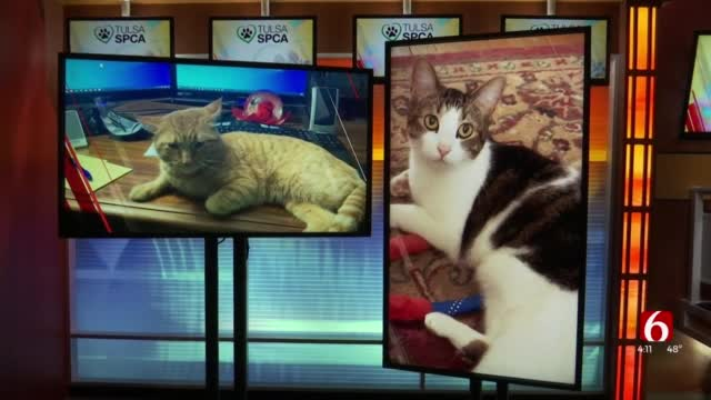 Watch: Pets And Dental Health