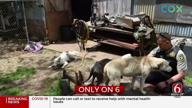 Wagoner Co. Deputies Shut Down Suspected Illegal Puppy Mill Operation