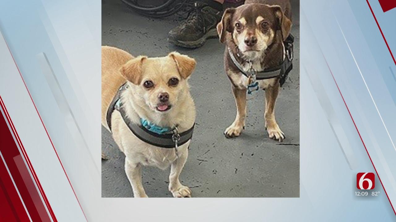 Pets Of The Week: Peanut & Sarge