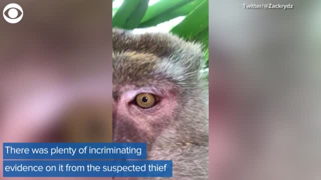 Watch: Monkey Steals Phone And Takes Selfies