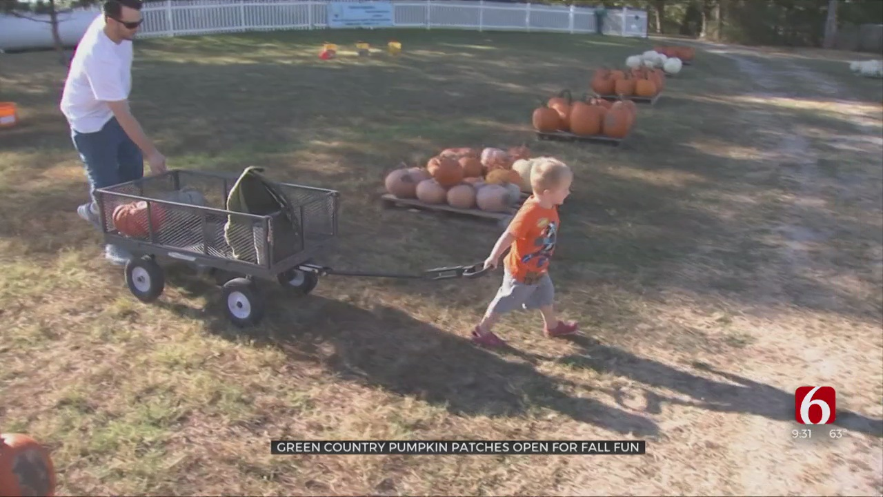 Pumpkin Patches Across Green Country Welcome Visitors With Start Of Fall