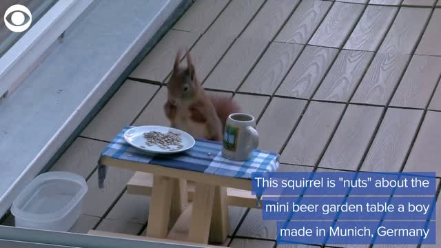 German Boy Makes Little 'Beer Garden' Table For A Squirrel