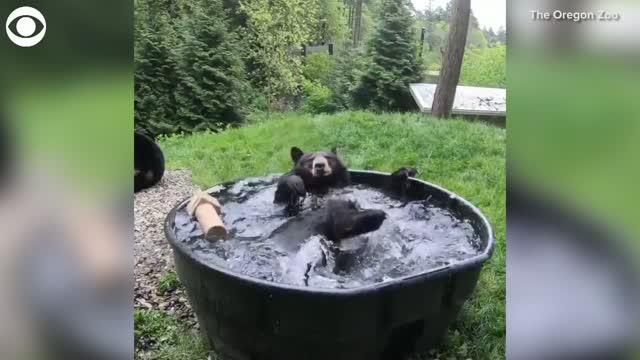 Bear splashes around in the tub