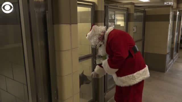 Watch: Santa Claus, Elf Visit California Animal Shelter