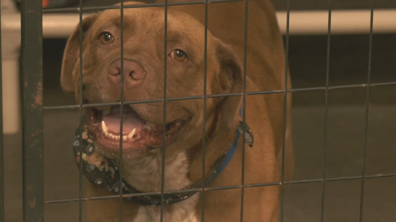 Tulsa Animal Shelter In Need Of New Air Conditioning System As Heat Rises