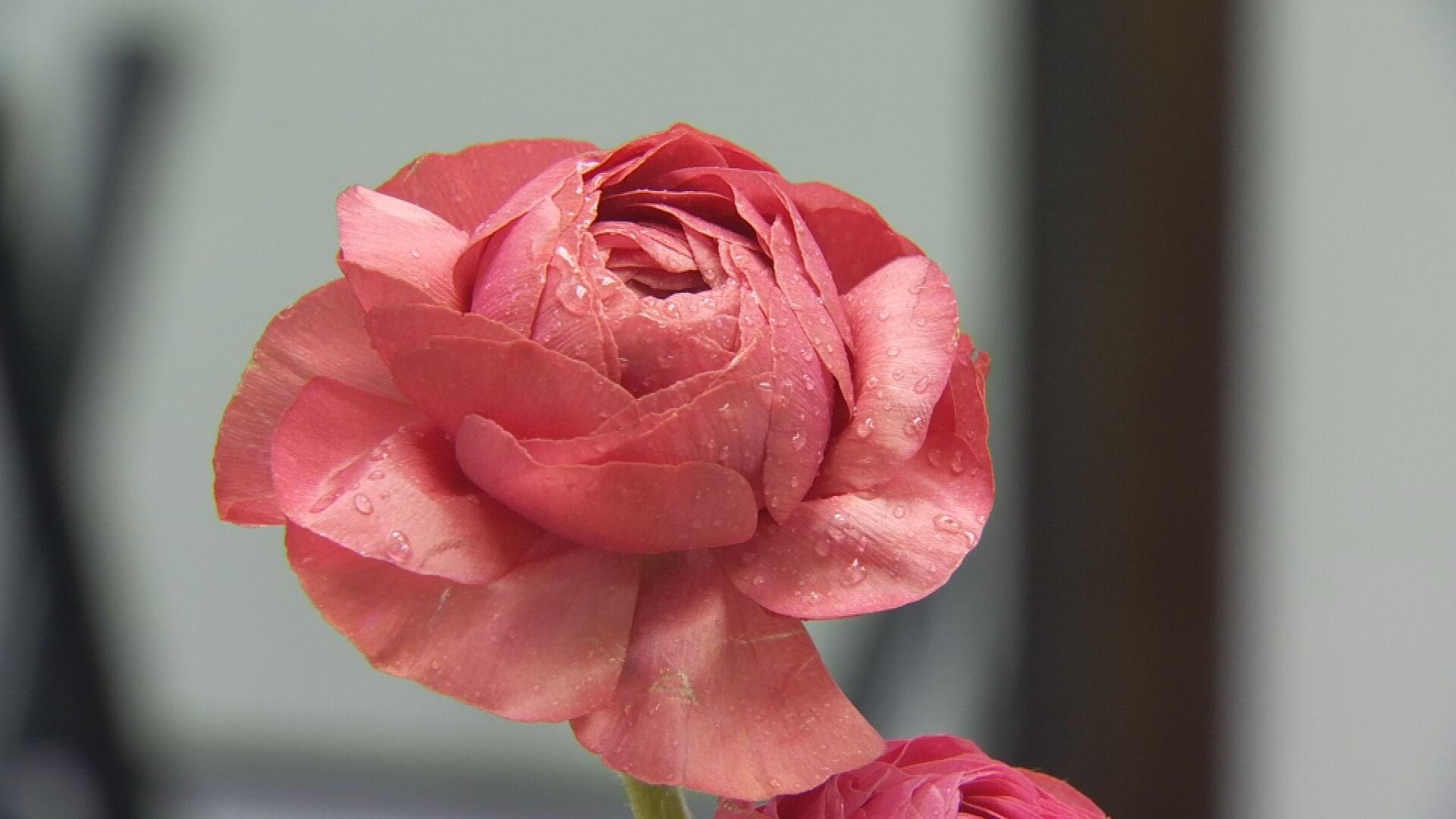 Flower Shortage Impacts Oklahoma Florists