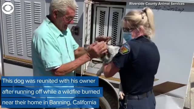 Watch: Firefighters Rescued A Dog From Apple Fire In California