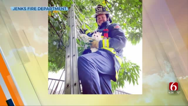 Watch: Jenks Firefighter Rescues Cat From A Tree