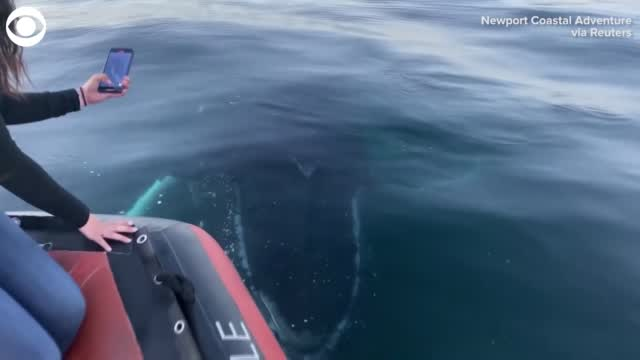 Watch: Whale Gets Up Close With California Whale Watchers