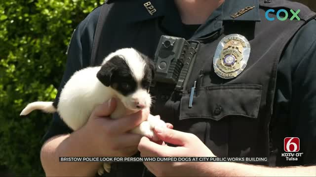 Bristow Police Search For Person Who Abandoned Dog, Puppies At City Building
