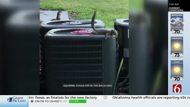 Watch: Squirrel Finds Unique Way To Stay Cool