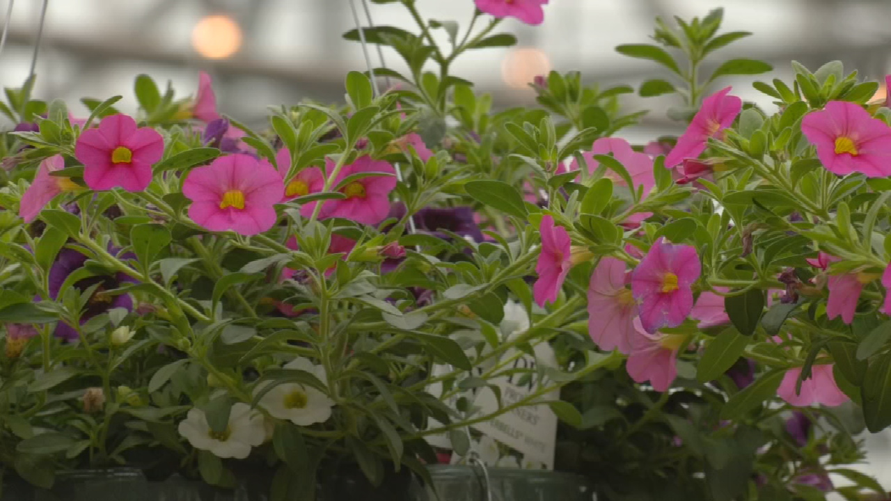 Some Plants At Risk Of Damage Following Freezing Temperatures