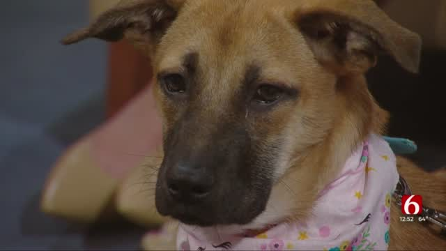 Pet Of The Week: Tosca