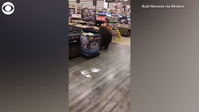 Watch: Bear Picks Up A Snack From California Supermarket