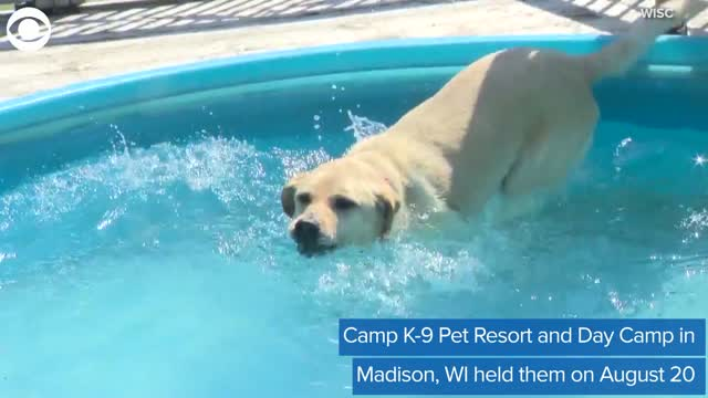 WATCH: Dog Day Camp Holds Pup Olympics