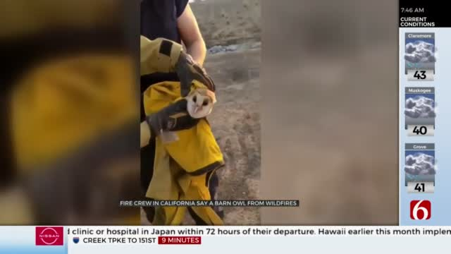 Watch: California Fire Crew Saves Owl From Wildfires