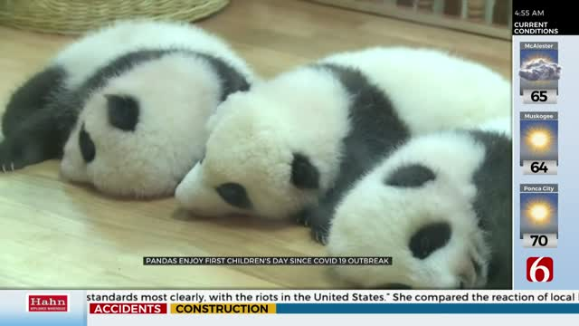 Panda Cubs Celebrate 'Children's Day'