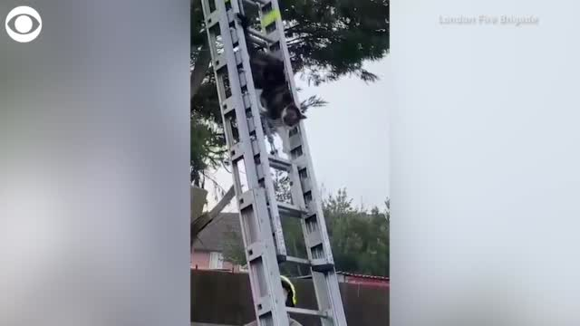 Watch: Cat Rescues Itself From A Tree In The U.K.