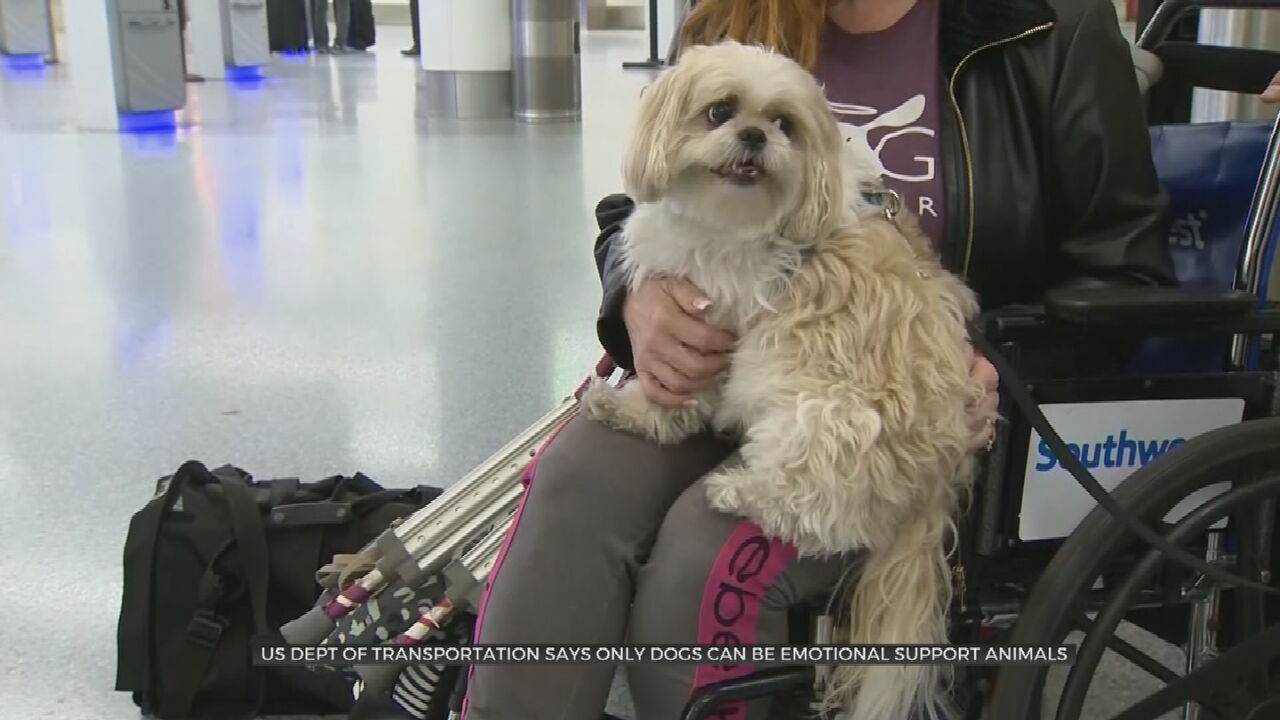 U.S. Ruling Excludes Emotional Support Animals From Planes
