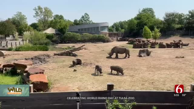 Wild Wednesday: World Rhino Day