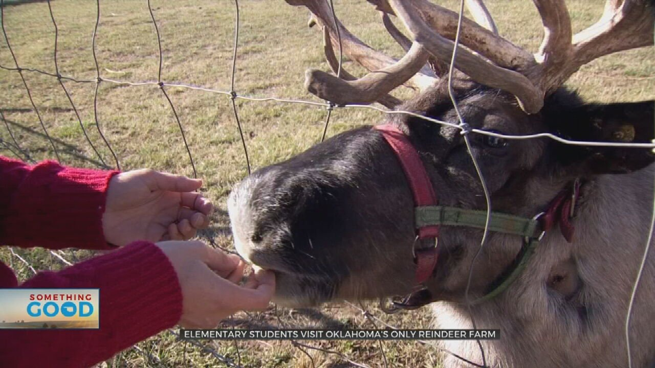 Oklahoma's Only Reindeer Farm Makes Christmastime More Magical