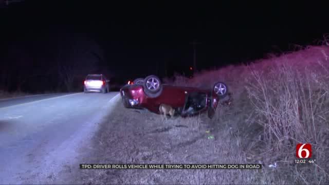Tulsa Police Say Stray Dog Caused Rollover Crash