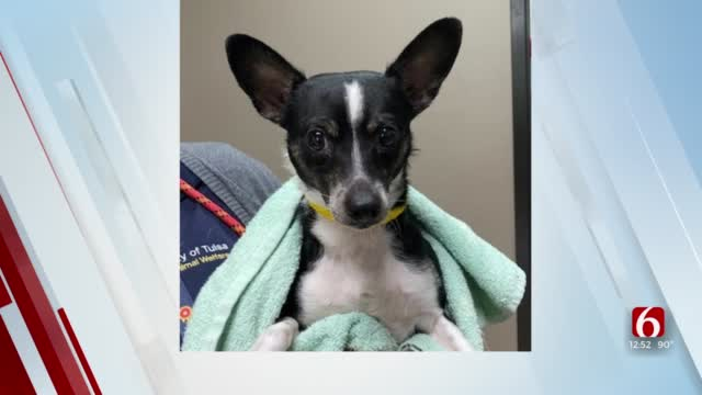 Pet Of The Week: Chito
