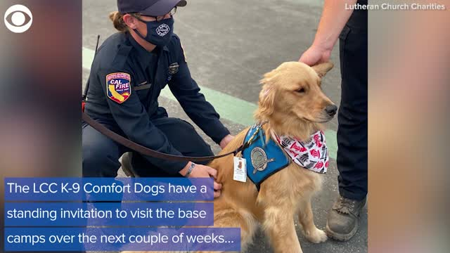 WATCH: Comfort Dogs Support California Firefighters