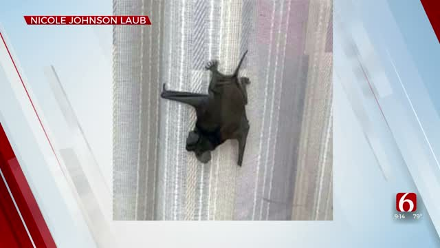 Wilburton Post Office Open Again After Bats Removed
