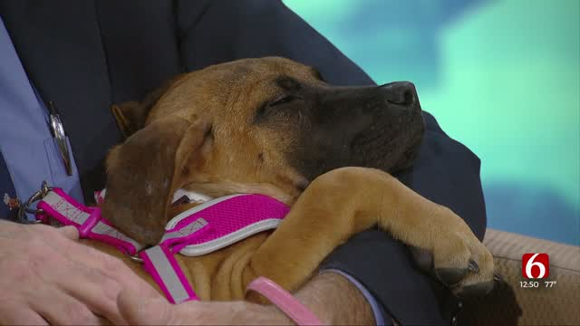 Pet Of The Week: Peppi