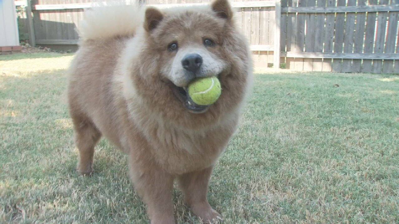 Tulsa Dog Named Finalist In People Magazine's 'World's Cutest Rescue Dog' Contest