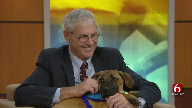 Pet Of The Week: Crumpet