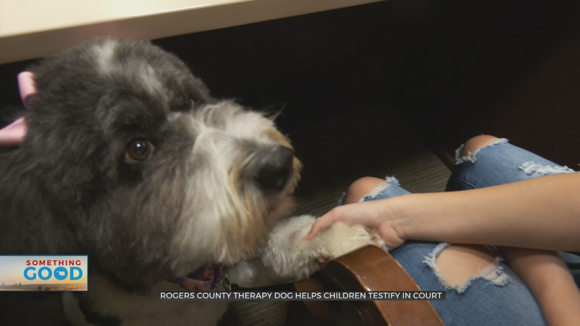 Rogers County Therapy Dog Comforts Children Testifying In Court