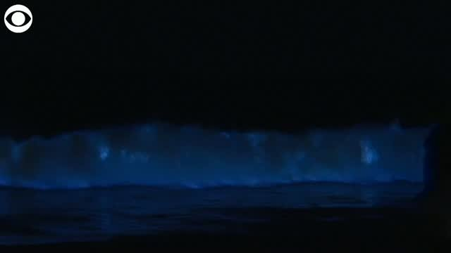 Bioluminescent waves in California