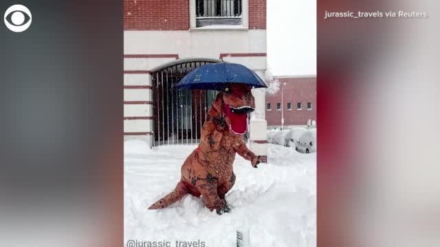 Watch: Dinosaur Plays In The Snow In Spain