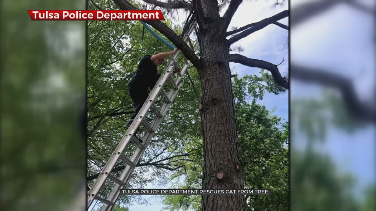 Tulsa Police Department Rescues Cat From Tree