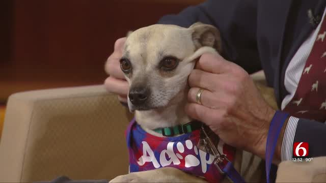 Pet Of The Week: Peesh