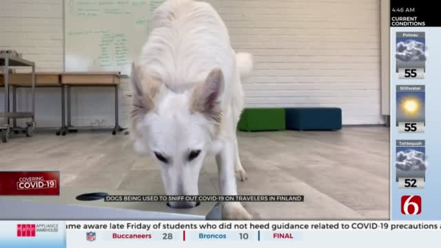 WATCH: Finland Airport Using Dogs To Sniff Out COVID-19