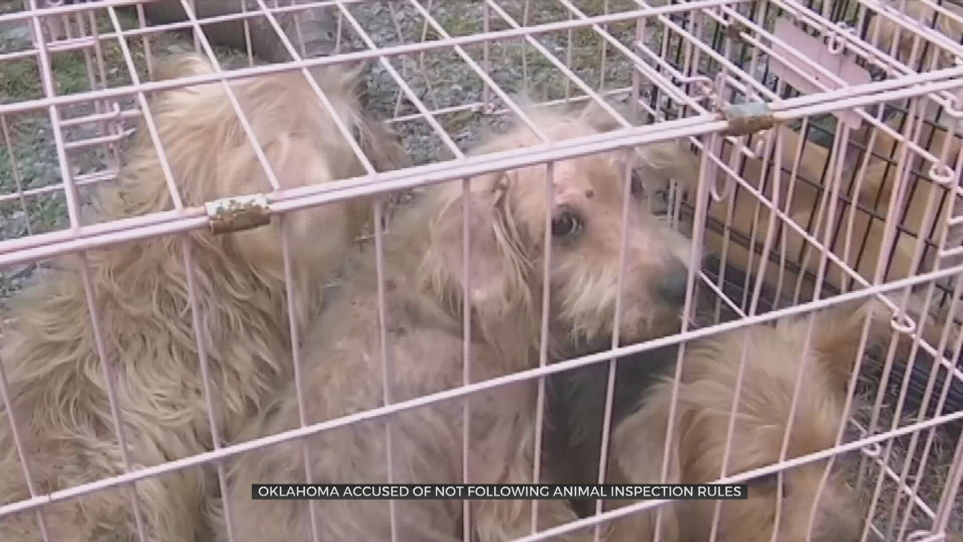 US Humane Society Calls Out Problematic Puppy Mill Inspections In Oklahoma