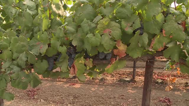 California Wildfires Impacting Wine Industry