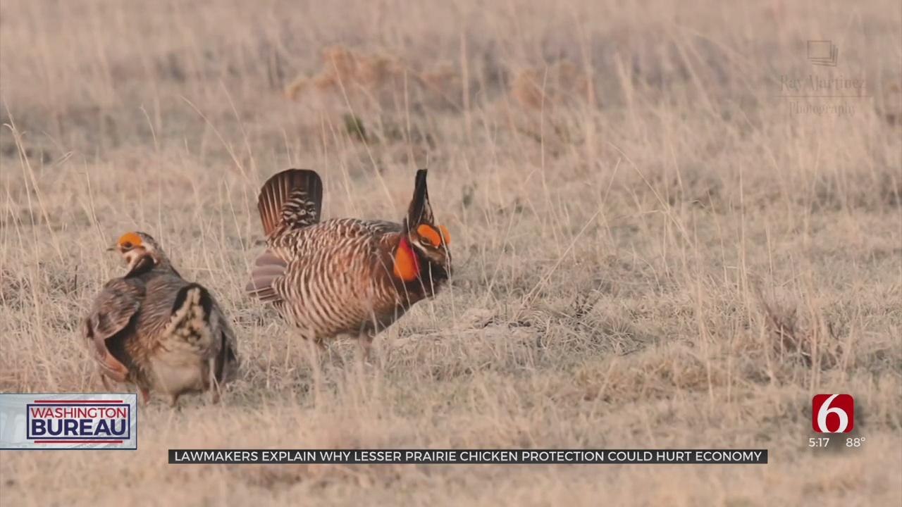 Oklahoma Senators Request More Time Before Lesser Prairie-Chicken Is Listed As Endangered