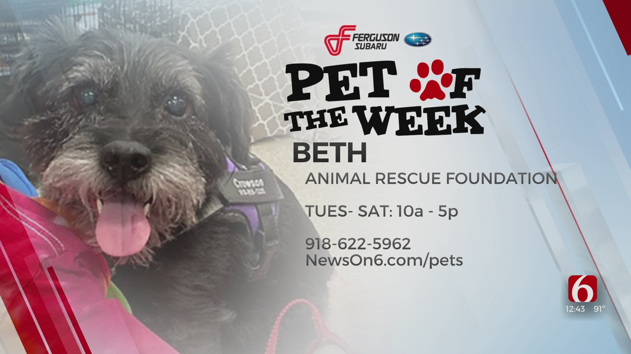 Pet Of The Week: Beth The Terrier Mix
